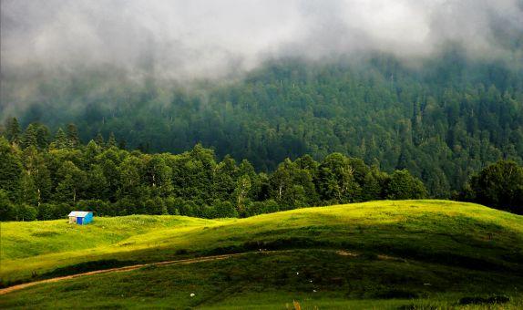 Ormanı Gençleştirme Yangınların Etkisini Azaltıyor