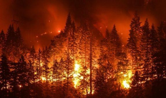 Orman Yangını ile Karşılaşınca Yapmamız Gerekenler