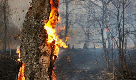 TEMA Orman Yangınlarına Karşı Uyarıyor
