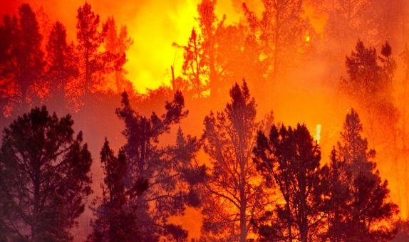 Uyarı Sistemi ile Orman Yangınlarına Erken Müdahale Mümkün