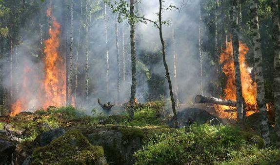Orman Yangınlarını Tespit için Kablosuz Sensör Ağları
